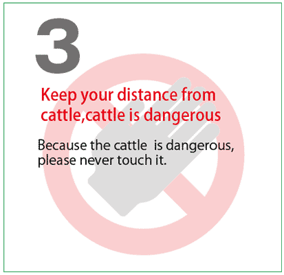 Keep your distance from cattle,cattle is dangerous